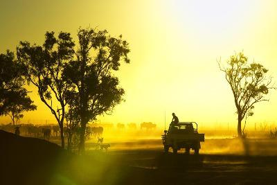 Silhouetted Cattle Muster at Sunset, Armraynald Station.