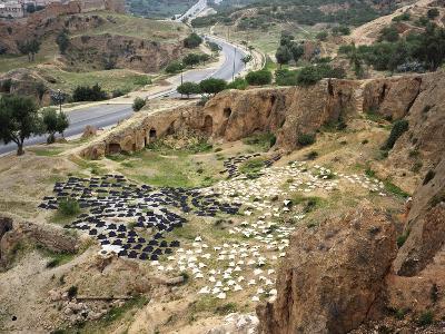 Tanned Animal Hides Drying on Hillside