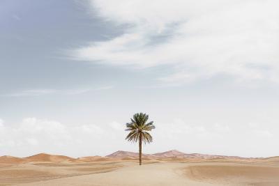 Palm Tree in Desert Landscape