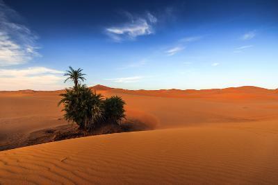 Oasis on Desert