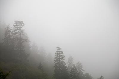 Mountains and Trees in the Fog