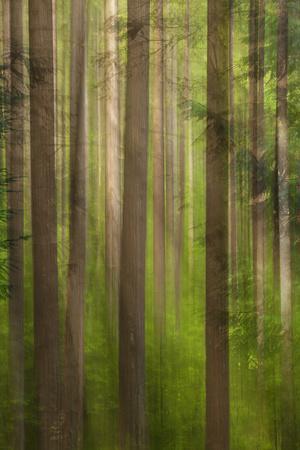 Usa, Oregon, Columbia River Gorge, Elowah Falls Trail, View of Tree Trunks
