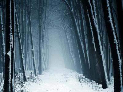 Path into Snowy Forest on Foggy Day