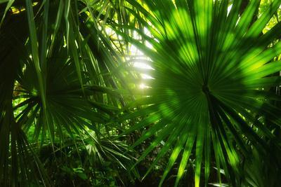 Mexico, Yucatan, Palm Grove