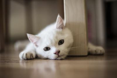 White Cat in the Floor
