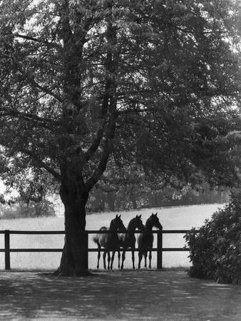 Sunningdale Park Horses