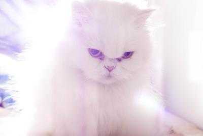 Light Cat