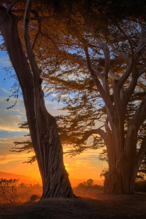Cypress Tree Sunrise, Glorious Point Reyes National Seashore, California Coast