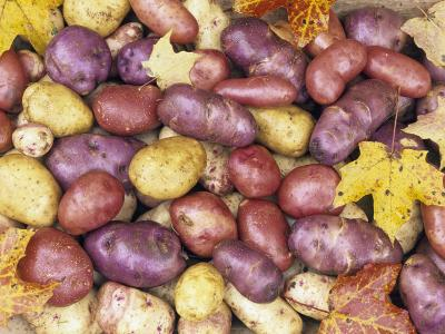 Heirloom Potato Varieties
