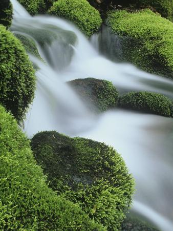 Small Mountain Stream and Moss-Covered Rocks, Great Smoky Mountains National Park, Tennessee, USA