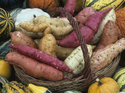 Sweet Potato Harvest