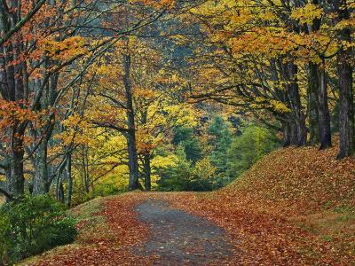 Walking Trail around Bass Lake in the Autumn, Blowing Rock, North Carolina, USA