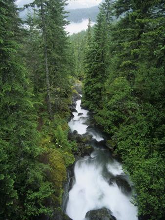 Nickel Creek, Mt. Rainier National Park, Washington, USA