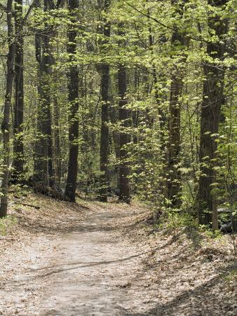Path Through a New England Deciduous Forest in the Spring, USA