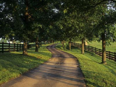 Tree-Lined Winding Road and Fences at First Light Between Pastures, Kentucky, USA