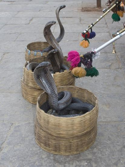 Snake Charmers Baskets Containing Cobras, Jaipur, India