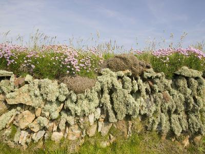 Drystone Wall on the Edge of Farm Field at Baggy Point in Devon, United Kingdom