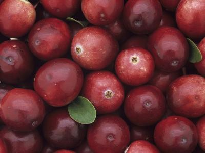 A Harvest of Colorful Cranberries (Vaccinium Macrocarpon)