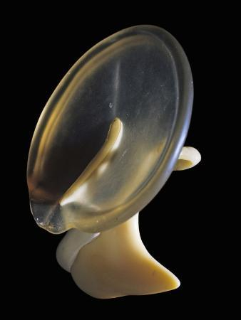 Model of the Human Eardrum and the Three Bones of the Middle Ear
