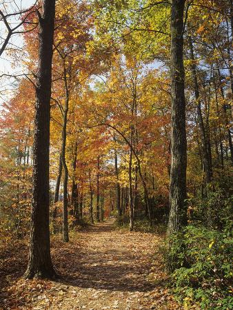Pathway Through an Autumn Deciduous Forest, Red River Gorge Geological Area