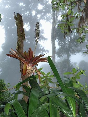 Cloud Forest with Bromeliad, Chirripo National Park, Costa Rica