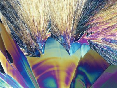 Polarized View of Tartaric Acid Crystals, LM X40