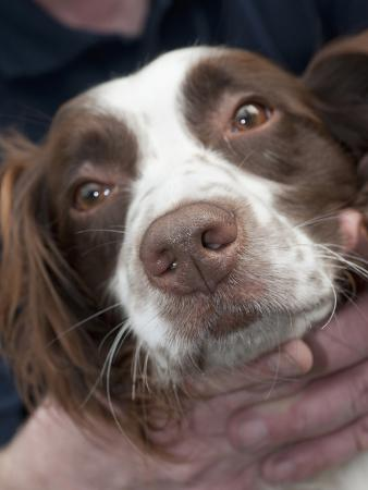 A Dog's Nose Has Twenty Times More Odor Receptors Than a Human Nose