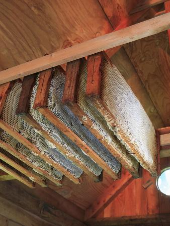 Honey Bee Hive Frames Filled with Honey are Stored While Awaiting Extraction the Honey House