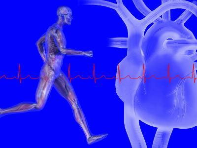 Runner, Male Likeness Showing Musculature and Skeleton Against an Ekg and Heart