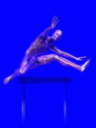 Biomedical Illustration of a Man Jumping over a Hurdle, Showing Musculature and Skeleton