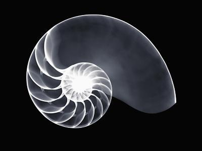 X-Ray of a Chambered Nautilus Shell