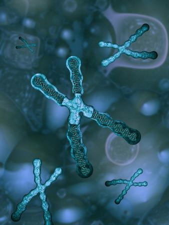 Chromosomes Within a Cell, The Large Chromosome in The Center is Sectioned To Show The Dna Inside