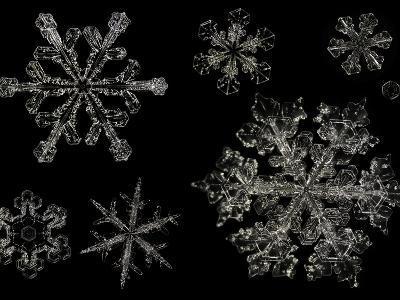 Snowflake Variety, LM