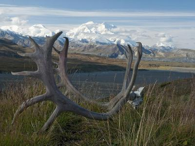 Shed Caribou Antlers on the Tundra in Front of Mt. Mckinley, Denali National Park, Alaska, USA