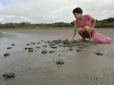 An Olive Ridley Sea Turtle Hatchling (Lepidochelys Olivacea) on its Way to the Distant Sea