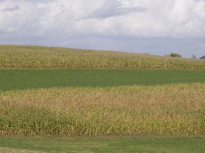 Corn Fields, Strip Farming, Iowa