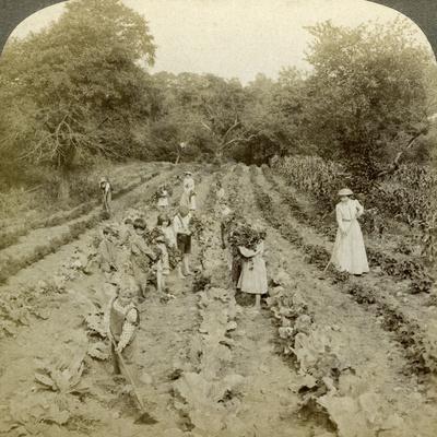 Children Working in a Vegetable Garden, Salvation Army Home, Spring Valley, New York, Usa