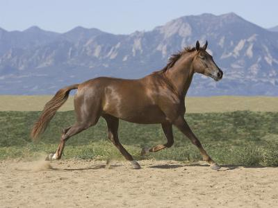 Oldenburg Horse Trotting, Colorado, USA