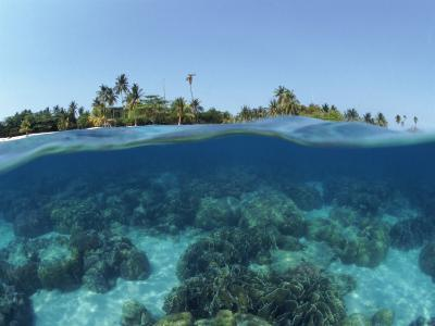 Split-Level Shot of Coral Reef and Shore, Phillippines