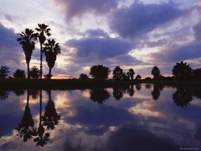 Palm Trees Silhouetted by Water at Sunset, Texas, USA