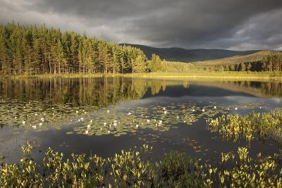 Stormy Light over Bog, Glenfeshie, Cairngorms Np, Highlands, Scotland, UK, August 2010