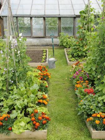 Summer Garden with Mixed Vegetables and Flowers Growing in Raised Beds with Marigolds, Norfolk, UK