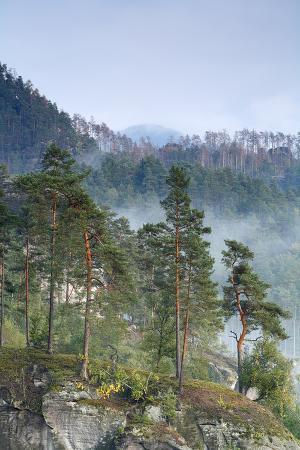 View from Rudolfuv Kamen Hillside of Forest in Mist, Jetrichovice, Ceske Svycarsko, Czech Republic