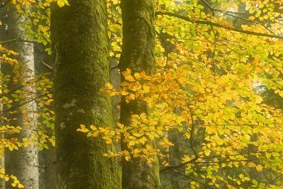 Autumn in Corkova Uvala with Silver Fir, European Beech and Spruce Trees, Plitvice Lakes Np,Croatia