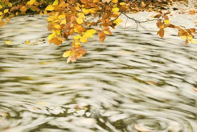 Foam and Dead Leaves in Motion on Water Surface of a Pool, Plitvice National Park, Croatia, October