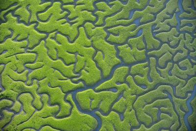 Aerial View of Marshes with Seaweed Exposed at Low Tide, Bahía De Cádiz Np,