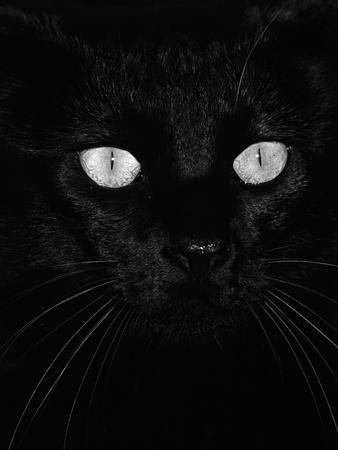Black Domestic Cat, Eyes with Pupils Closed in Bright Light