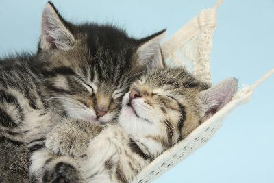 Two Cute Tabby Kittens Asleep in a Hammock
