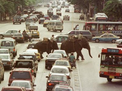 Thai Elephants Maneuver Their Way Through a Bangkok Traffic Jam in Downtown