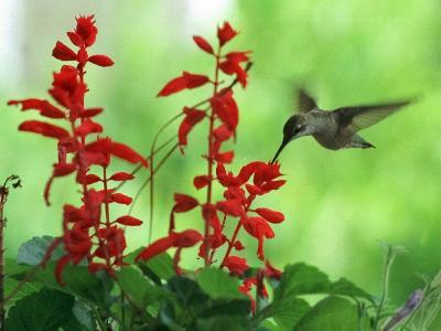 A Hummingbird Seeks Nectar from a Flower Box Outside a Home